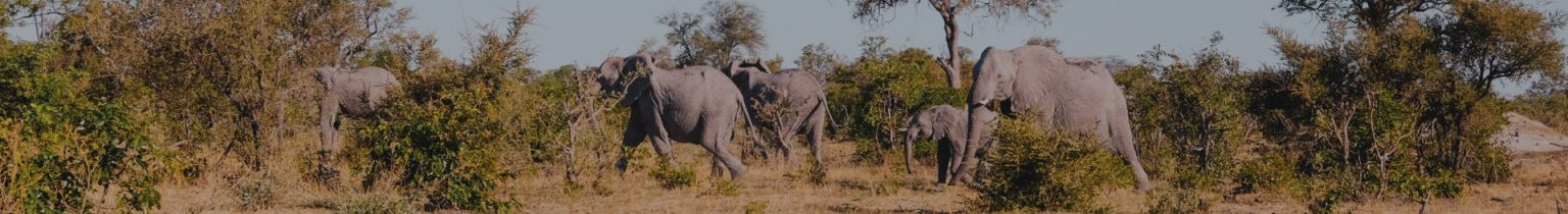 Elephants Springbuk Rise In Africa Lodges Campsites and B&Bs in Namibia