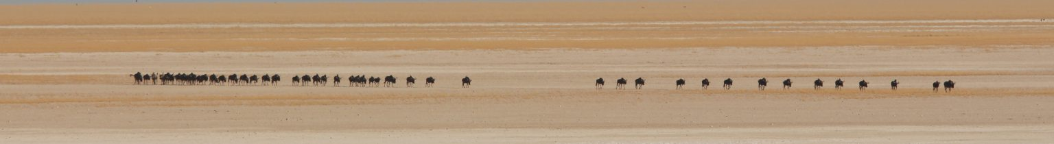 Wildlife Rise In Africa Lodges Campsites and B&Bs in Namibia